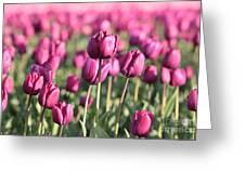 Purple Tulip Standouts Greeting Card