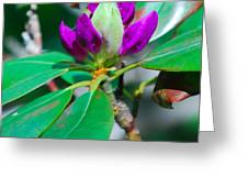 Purple Turtle Head Flower Greeting Card
