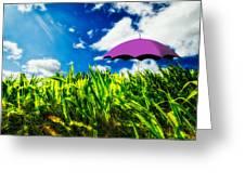 Purple Umbrella In A Field Of Corn Greeting Card
