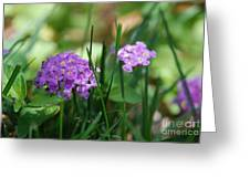 Purple Umbrellas Greeting Card