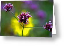 Purple Verbena Flowers Greeting Card