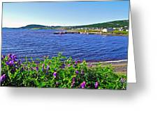 Purple Vetch Overlooking Rocky Harbour-nl Greeting Card