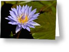 Purple Water Lily 2 Greeting Card