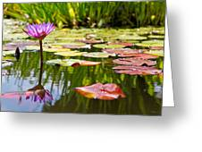 Purple Water Lily Flower In Lily Pond Greeting Card