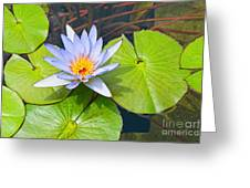 Purple Water Lily In Pond. Greeting Card