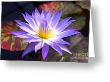 Purple Waterlily With Fall Lilypads Greeting Card