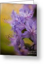 Purple Whispers Greeting Card by Mike Reid