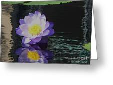 Purple White Yellow Lily Greeting Card