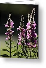 Purple Wild Flowers - 1 Greeting Card