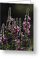 Purple Wild Flowers - 2 Greeting Card