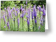 Purple Wild Flowers 2 Greeting Card