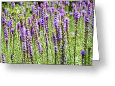 Purple Wild Flowers3 Greeting Card