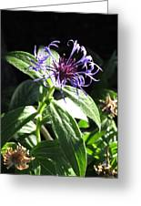 Purple Wildflower Greeting Card