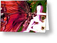 Purple Wings Two Greeting Card by Walter Klockers