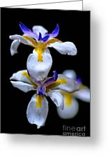 Purple Yellow And White Greeting Card by Bobby Mandal
