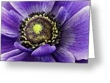 Purplelove Greeting Card