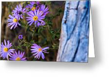 Purples And Blue Greeting Card