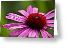 Purples And Reds Greeting Card