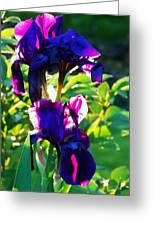 Purplr Iris Shines Greeting Card