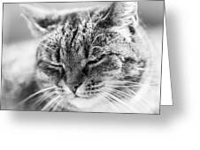 Purring Cat Greeting Card