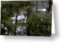 Pussy Willow In The Pines Greeting Card