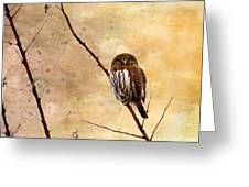 Pygmy Owl - The Watcher Greeting Card