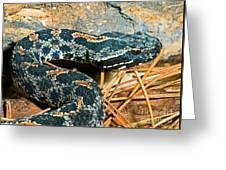 Pygmy Rattlesnake Greeting Card