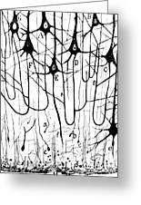 Pyramidal Cells Illustrated By Cajal Greeting Card