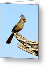 Pyrrhuloxia Cardinalis Sinuatus Female Greeting Card