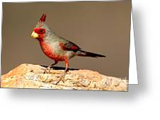 Pyrrhuloxia Cardinalis Sinuatus Male Greeting Card