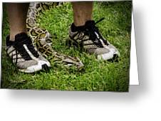 Python Snake In The Grass And Running Shoes Greeting Card