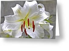 Qcpg 13-001 Greeting Card
