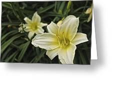 Qcpg 13-006 Greeting Card