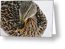 Quack Greeting Card