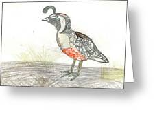 Quail Bird Greeting Card