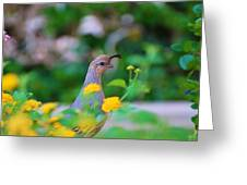 Quail In A Garden Greeting Card