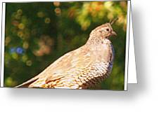 Quail Look Out Greeting Card