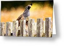 Quail Lookout Greeting Card