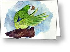 Quaker Parakeet Bird Portrait   Greeting Card by Olde Time  Mercantile