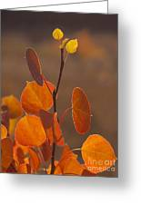 Quaking Aspen In Color   #3749 Greeting Card