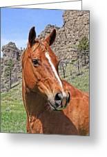 Quarter Horse Portrait Montana Greeting Card