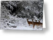 Quartet In The Snow Greeting Card