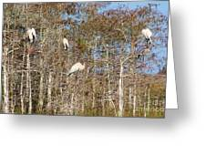 Quartet In The Trees Greeting Card