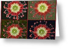 Quatro Floral - 0102cba Greeting Card