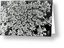 Queen Anne's Lace In Black And White Greeting Card