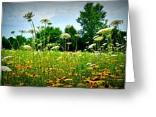 Queen Annes Lace Of The Butterfly Gardens Of Wisconsin Greeting Card by Carol Toepke
