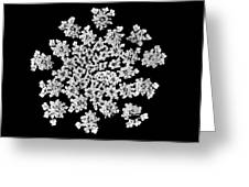 'queen Anne's Snowflake' Greeting Card