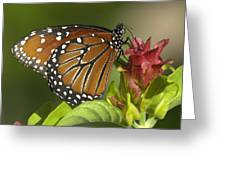 Queen Butterfly Greeting Card