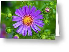 Queen Elizabeth Park Garden 5 Greeting Card