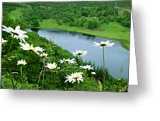 White Daisies At Queen's View 2 Greeting Card
